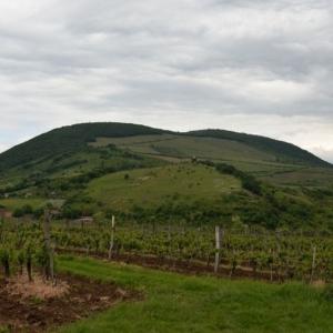 wineamore_pics